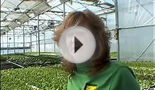 Hydroponics: A Profitable Business || How to earn money